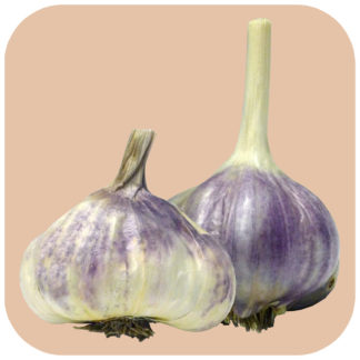 All Garlic