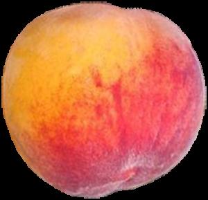elberta-peach_png500-x481