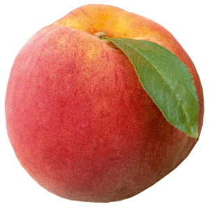 reliance-peach_png500-x494